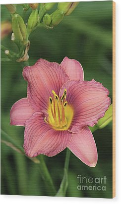 Jamaica Sunrise Daylily Wood Print