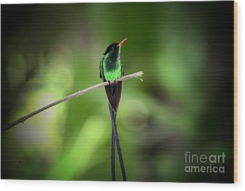 Jamaican Hummingbird Wood Print by Marjorie Imbeau