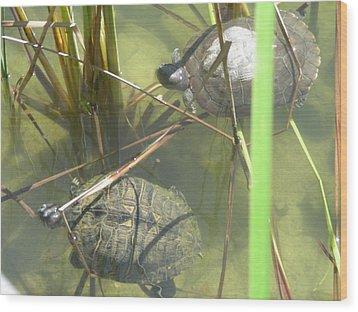 Jamaican Turtles Wood Print by Peter  McIntosh