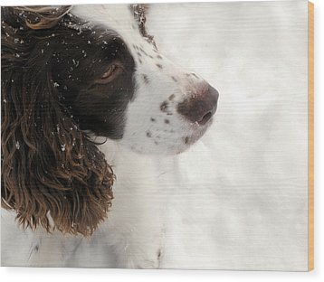 January Spaniel - English Springer Spaniel Wood Print by Angie Rea