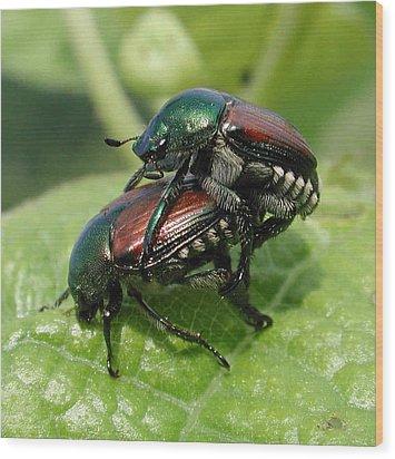 Japanese Beetles Mating Wood Print by Matt Cormons