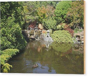 Japanese Garden At The Botanical Gardens In Hobart Tasmanis Wood Print by Bethwyn Mills