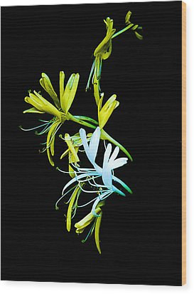 Wood Print featuring the photograph Japanese Honeysuckle by Bill Barber