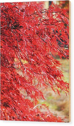 Japanese Maple 9 Wood Print by Tanya  Searcy