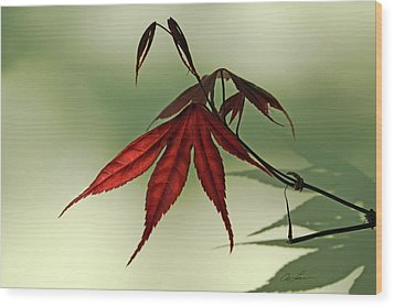 Wood Print featuring the photograph Japanese Maple Leaf by Ann Lauwers