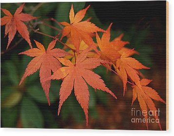 Japanese Maple Leaves Wood Print by Patricia Strand