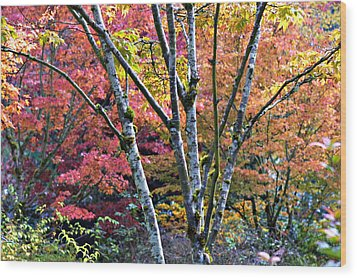 Japanese Maples In Full Color Wood Print
