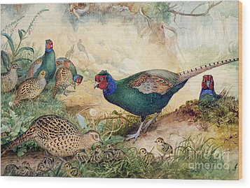 Japanese Pheasants Wood Print by Joseph Wolf