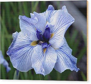 Japanese Water Iris In Blue 2695 H_3 Wood Print