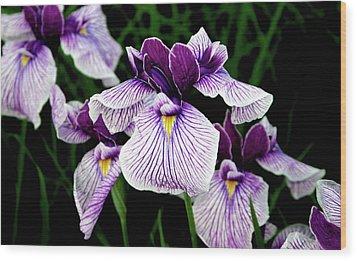 Japanese Water Iris In Purple 2714 H_2 Wood Print