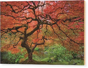 Japenese Garden, Portland Wood Print by Jesse Estes