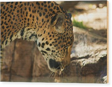 Jaquar Drinking Water Wood Print by Russell  Barton