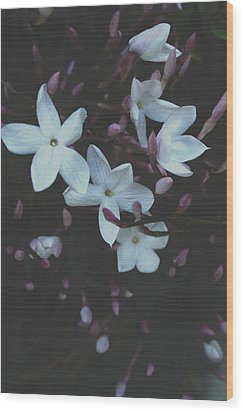 Wood Print featuring the mixed media Jasmine Dream- Photography By Linda Woods by Linda Woods