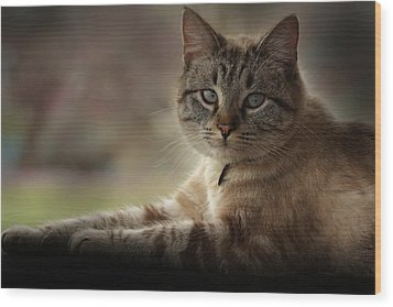 Wood Print featuring the photograph Jaspurr by Kim Henderson