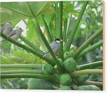 Java Sparrows Wood Print by Don Lindemann