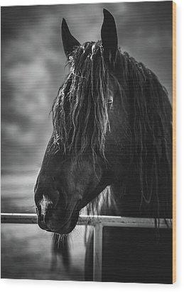 Jay The Rasta Horse Wood Print by Debby Herold