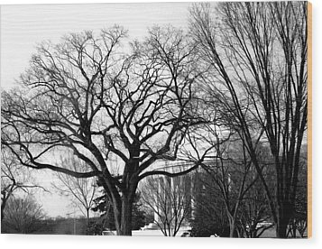 Jefferson Memorial - Distant View Wood Print by Fareeha Khawaja