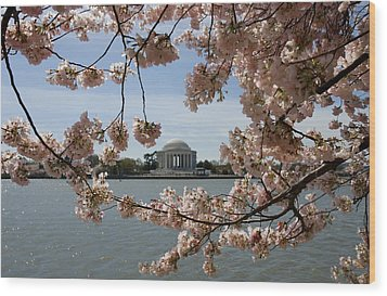 Jefferson Memorial Framed By Cherry Blossoms Wood Print by Brendan Reals