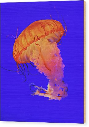 Jelly Fish Wood Print by Davidhuiphoto