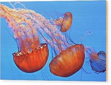 Jelly Fish Wood Print by Jill Buschlen