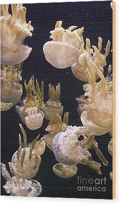 Jelly Parade Wood Print