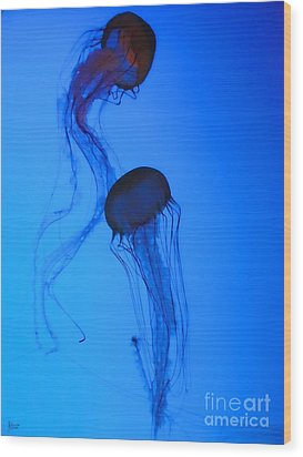 Jellyfish 5 Wood Print by Jeff Breiman
