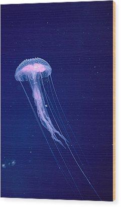 Jellyfish Wood Print by Dave Fleetham - Printscapes