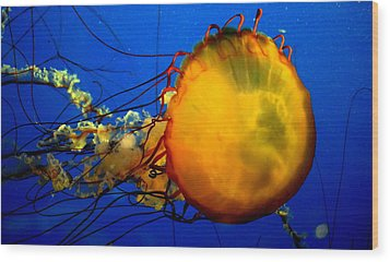 Jellyfish Wood Print by David Gilbert
