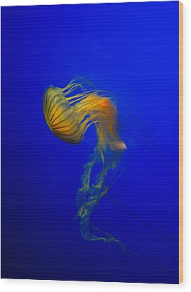 Jellyfish From The Deep Blue Wood Print by Nila Newsom