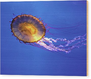 Jellyfish I Wood Print
