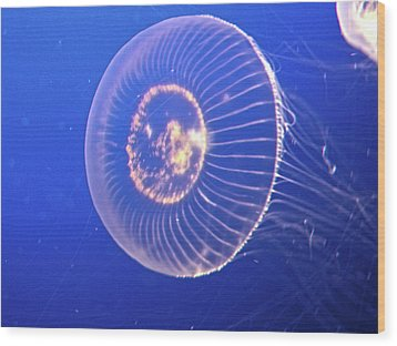 Jellyfish Iv Wood Print