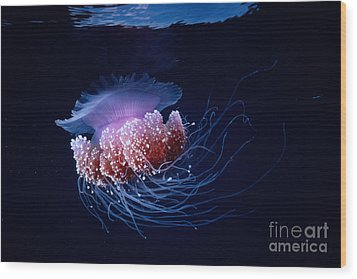 Jellyfish Wood Print by Steve Rosenberg - Printscapes