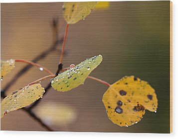 Wood Print featuring the photograph Jewels Of Autumn by Jim Garrison