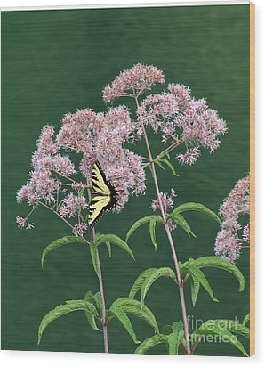 Joe Pye Weed Wood Print by Marilyn Carlyle Greiner
