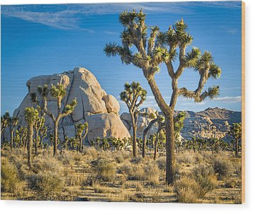 Joshua Tree And Intersection Rock Wood Print
