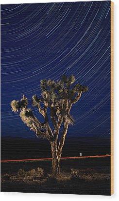 Joshua Tree And Star Trails Wood Print by Steve Gadomski