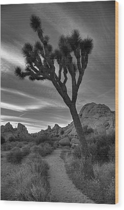 Joshua Tree Path Wood Print by Peter Tellone