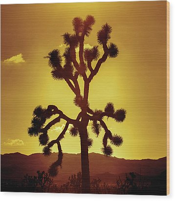 Wood Print featuring the photograph Joshua Tree by Stephen Stookey