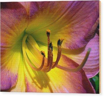 Joyful Lily Wood Print by Cynthia Daniel