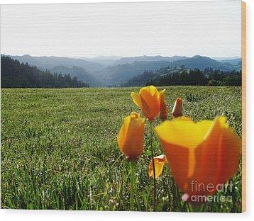 Jubilant Poppies Wood Print by JoAnn SkyWatcher