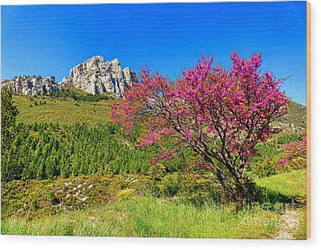 Wood Print featuring the photograph Judas Tree In Sainte Baume by Olivier Le Queinec