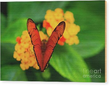 Wood Print featuring the photograph Julia Butterfly, Dryas Iulia by Ralph A Ledergerber-Photography