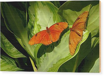 Wood Print featuring the photograph Julia Butterfly Pair by Rosalie Scanlon