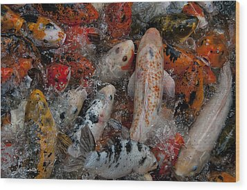 Jumping Koi Wood Print by Wilma  Birdwell