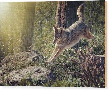 Jumping Rocks Wood Print