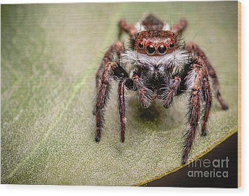 Wood Print featuring the photograph Jumping Spider by Tosporn Preede