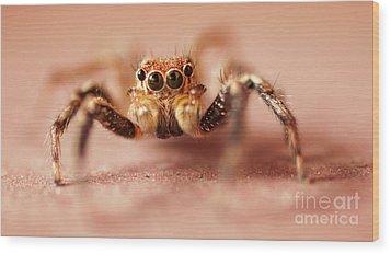 Jumping Spider Wood Print by Venura Herath