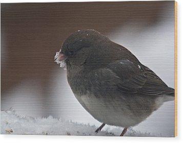 Junco In Snow Wood Print by Douglas Barnett