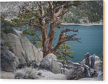 June Lake Juniper Wood Print by Cat Connor
