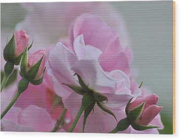 June Roses 1 Wood Print by Gerald Hiam
